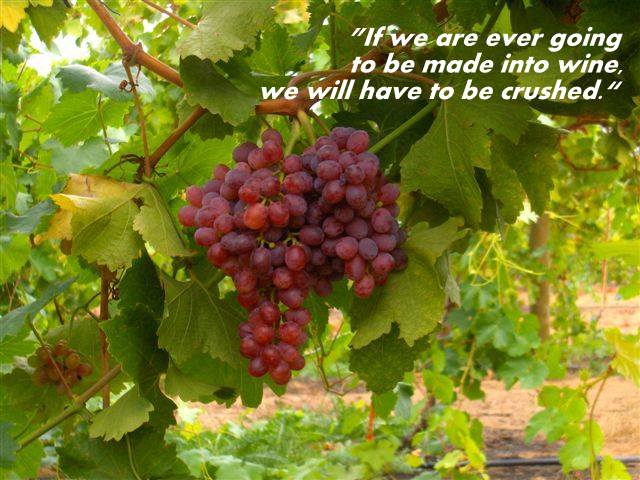 grapes with scripture