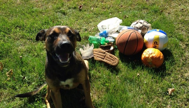 """Charlie with the """"toys"""" he had scattered across the yard earlier this fall."""